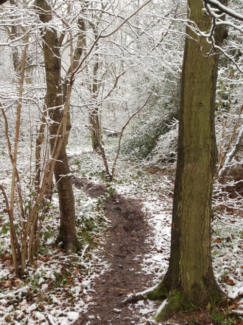 March 2013-snow in the woods