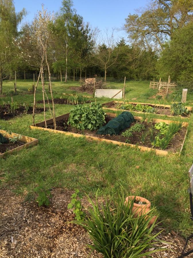 Veg garden almost done