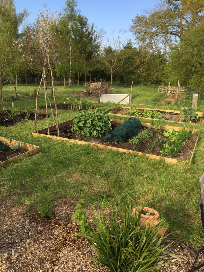 Veg garden almost done