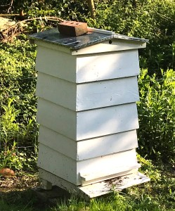 Hive with two supers full of honey