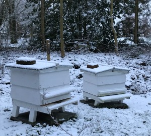 hives in snow feb 18
